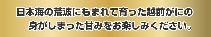 日本海の荒波にもまれて育った越前がにの身がしまった甘みをお楽しみください。